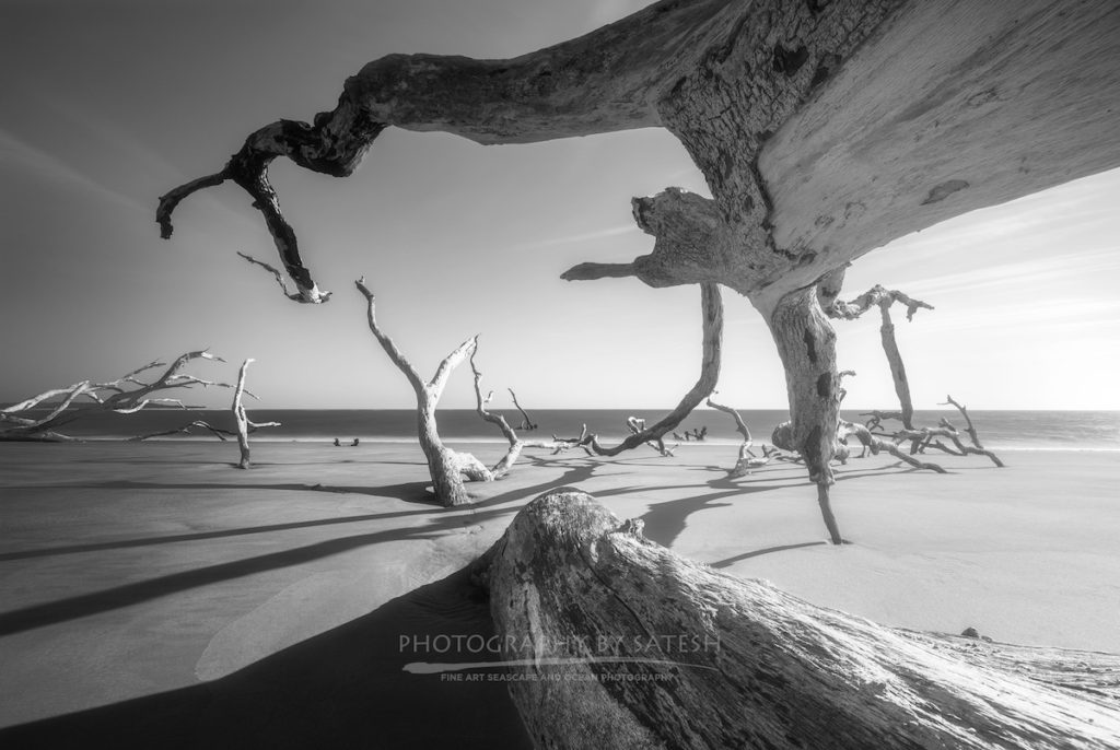 Boneyard Beach Big Talbot Island Florida Landscape Photography