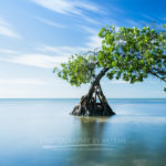 Florida Keys Landscape Photography