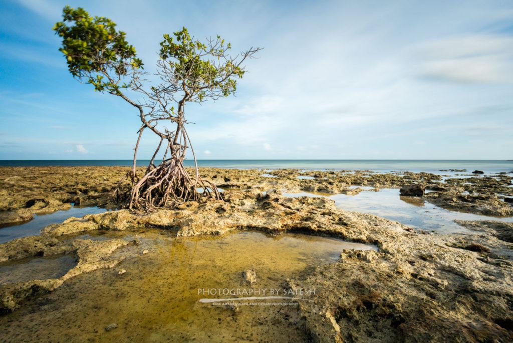 Fine Art Florida Landscape Photography