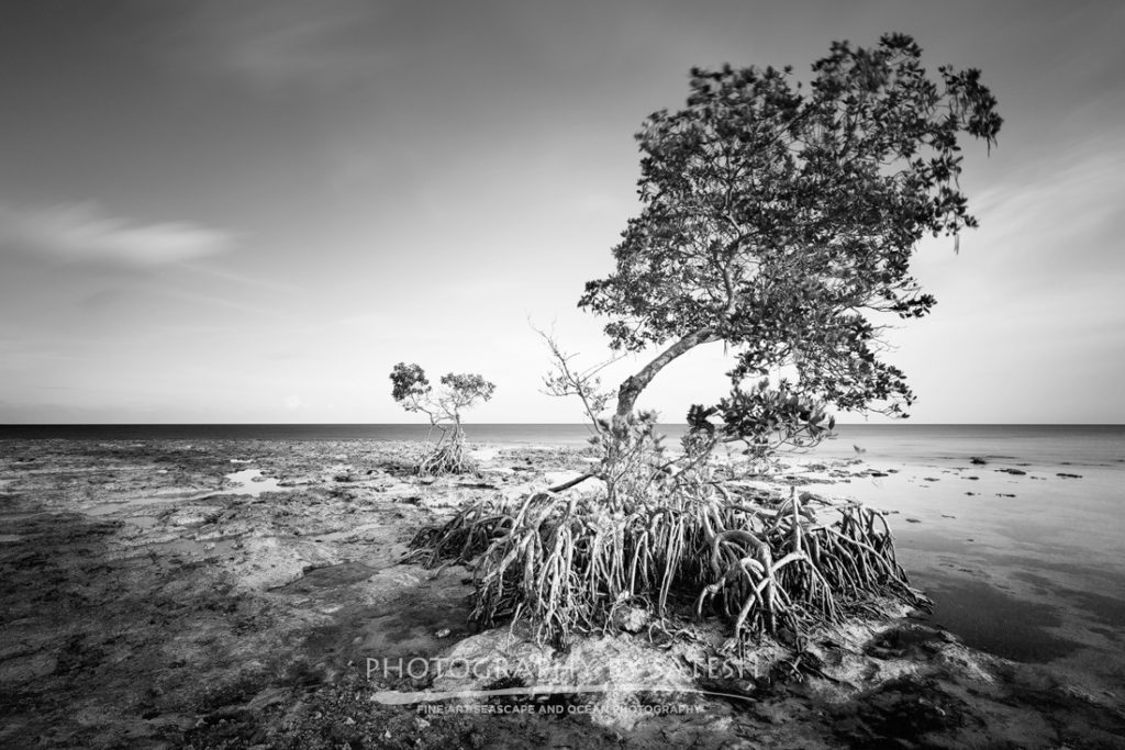 Mangroves in Keys West Florida landscape photography