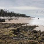 Black Rock Beach Big Talbot Island