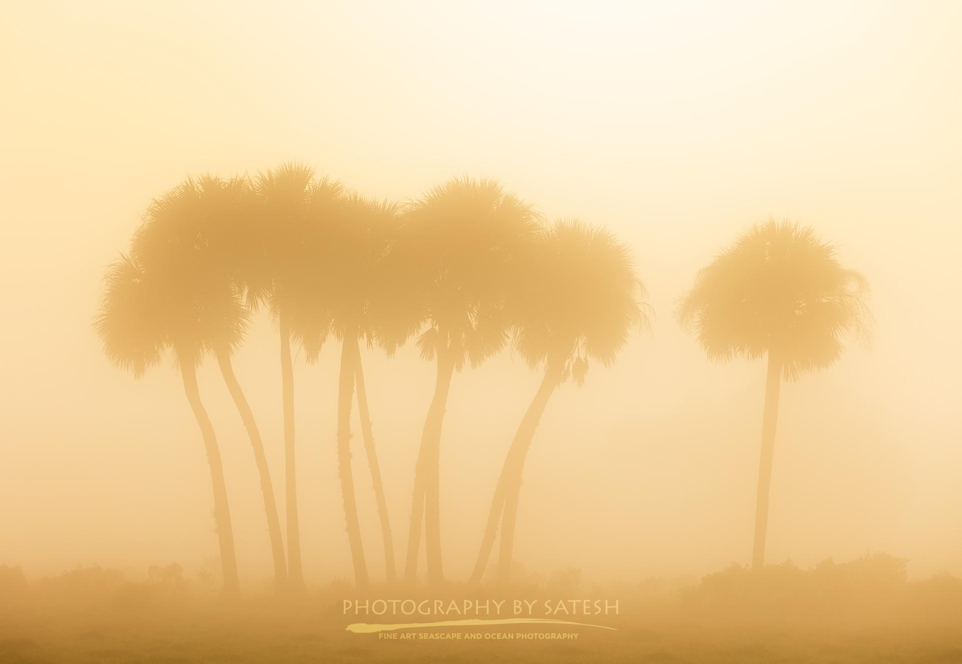Dinner Island Ranch foggy sunrise
