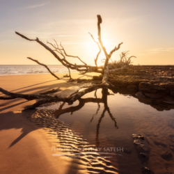 Boneyard Beach Big Talbot Island